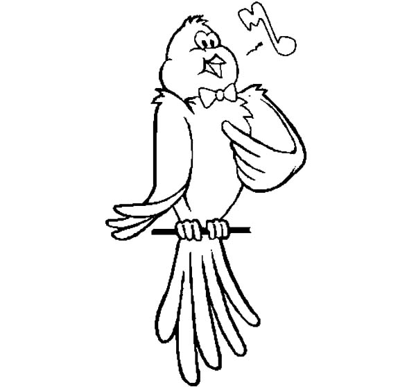 Canary Bird, : Canary Bird Singing Coloring Pages