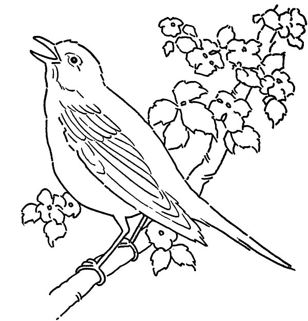 Canary Bird, : Canary Bird Singing on Tree Coloring Pages