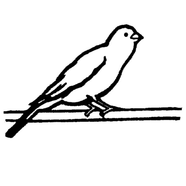 Canary Bird, : Canary Bird Standing on Tree Branch Coloring Pages