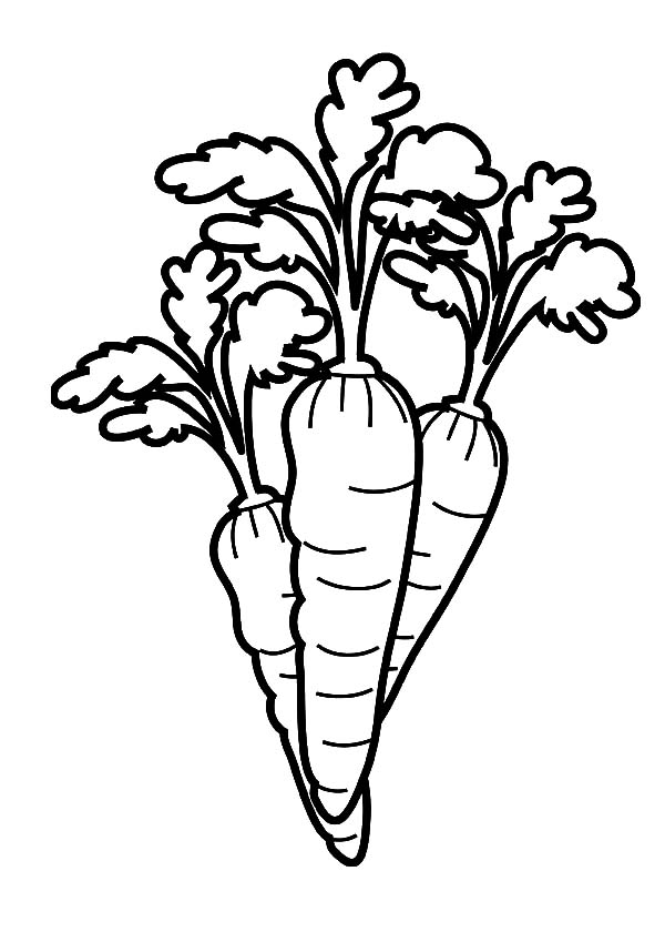 Carrot, : Carrot Garden Coloring Pages