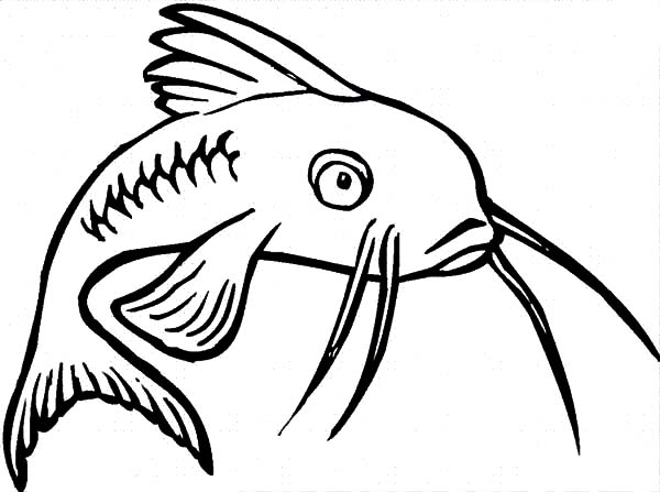 Catfish, : Catfish Feeling Bored Coloring Pages