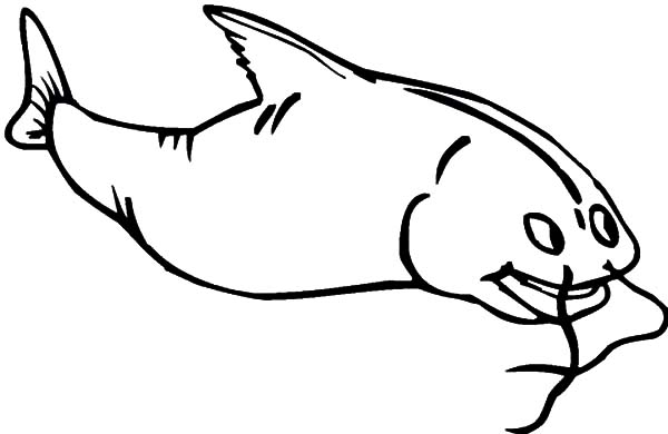 Catfish, : Catfish Feeling Excited Coloring Pages