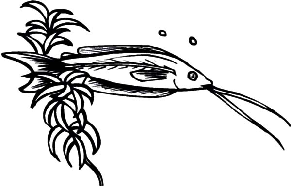Catfish, : Catfish and Water Plant Coloring Pages