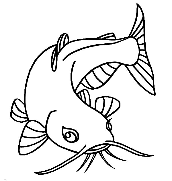 Catfish, : Catfish with Beuatiful Eyes Coloring Pages