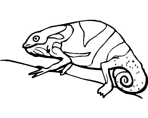 chameleon adapt to environment coloring pages - Chameleon Coloring Pages Print