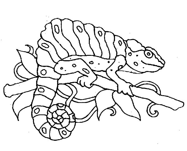Chameleon, : Chameleon Aiming for Its Prey Coloring Pages