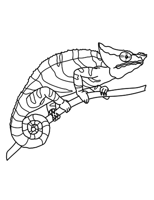 chameleon amazing eyes coloring pages - Chameleon Coloring Pages Print