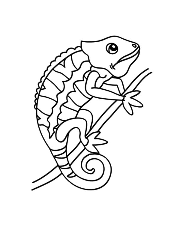 Chameleon, : Chameleon Changing Color Coloring Pages