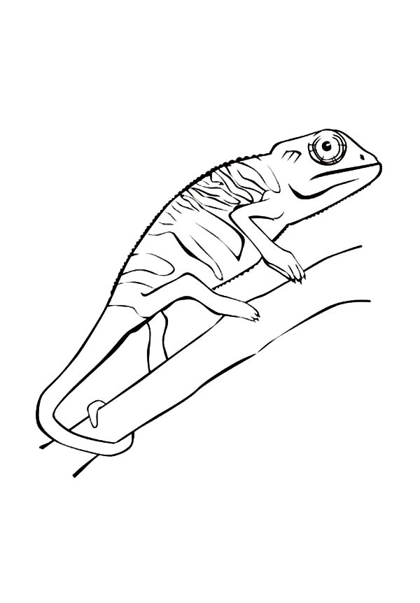 Chameleon, : Chameleon Climb on Tree Coloring Pages