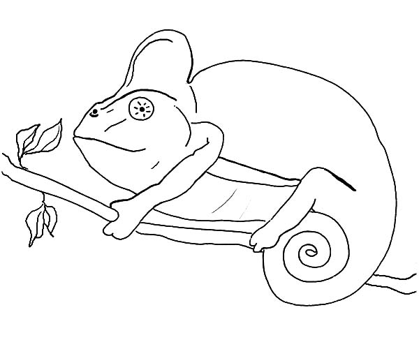 Chameleon, : Chameleon Coloring Pages for Kids