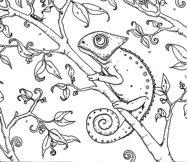 Chameleon, : Chameleon Painting Coloring Pages
