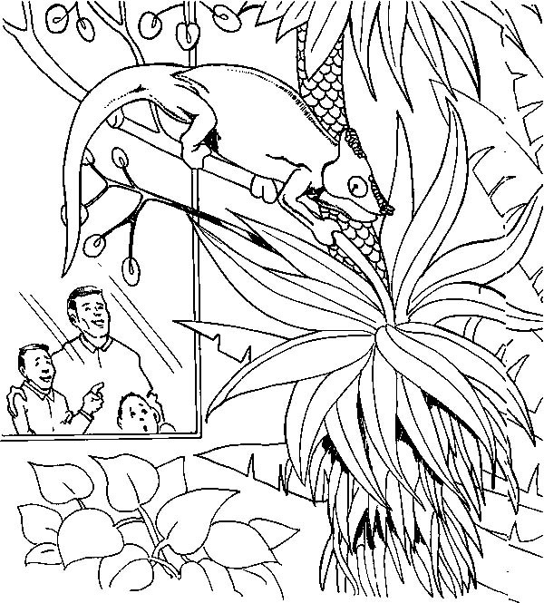 Chameleon, : Chameleon in the Zoo Coloring Pages