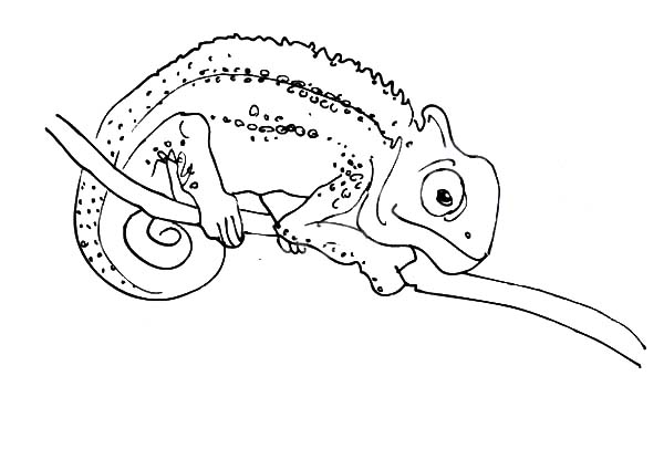 chameleon is capable to look in two direction coloring pages - Chameleon Coloring Pages Print