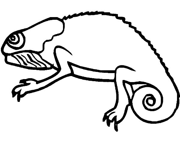Chameleon, : Chameleon is Hungry Coloring Pages