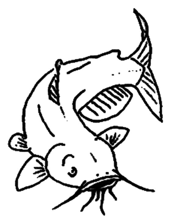 Catfish, : Channel Catfish Coloring Pages