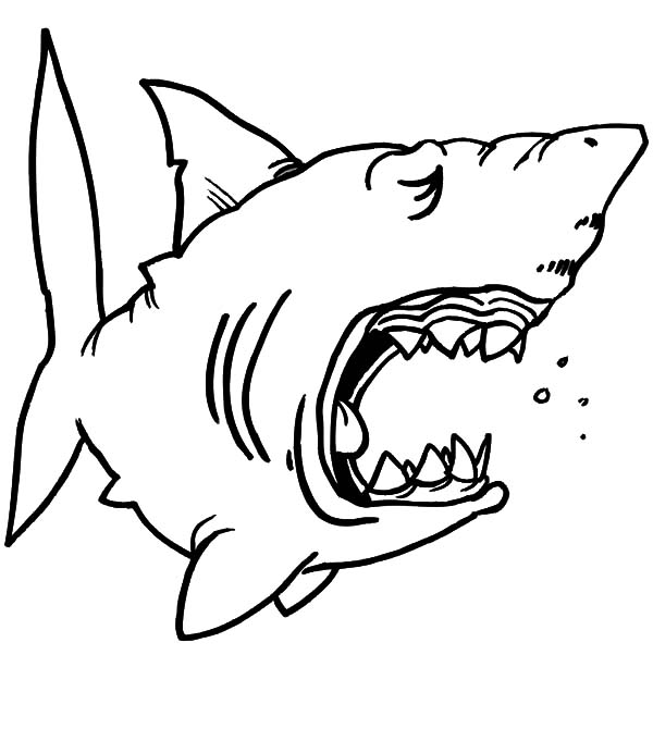 Jaws, : Chibi Shark Jaws Coloring Pages