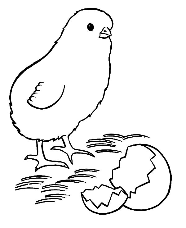 Chick Hatching, : Chick Hatching Coloring Pages