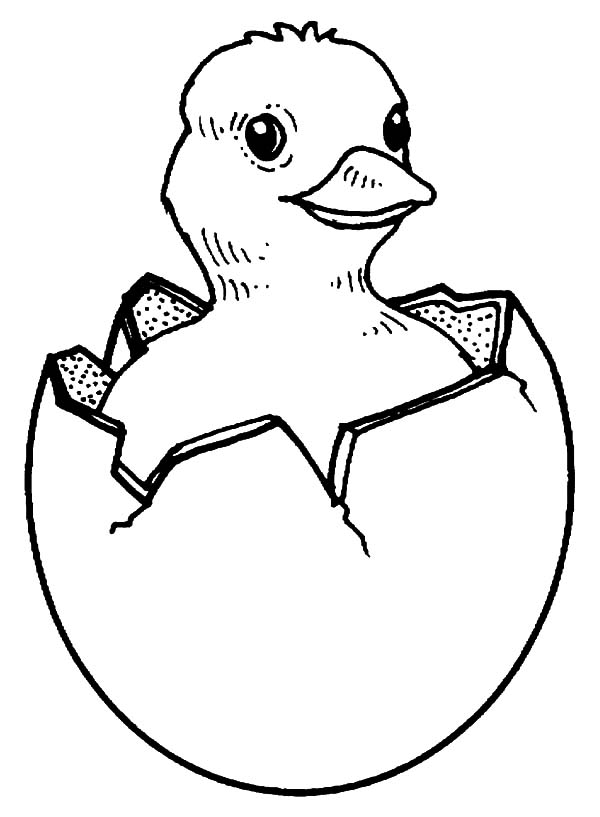 Chick Hatching, : Chick Hatching Picture Coloring Pages