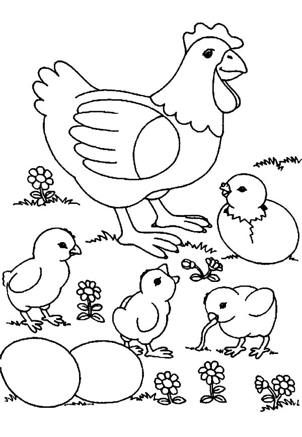 Chick Hatching, : Chick Hatching and Their Mother Coloring Pages