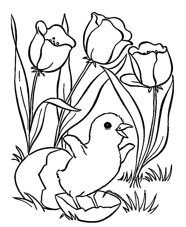 Chick Hatching, : Chick Hatching and Tulips Flower Coloring Pages
