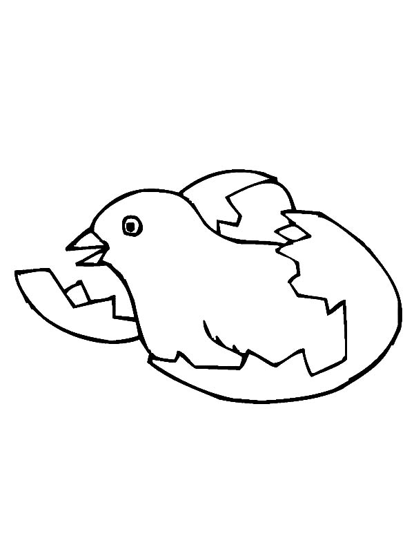 Chick Hatching, : Chick Hatching from Egg Coloring Pages