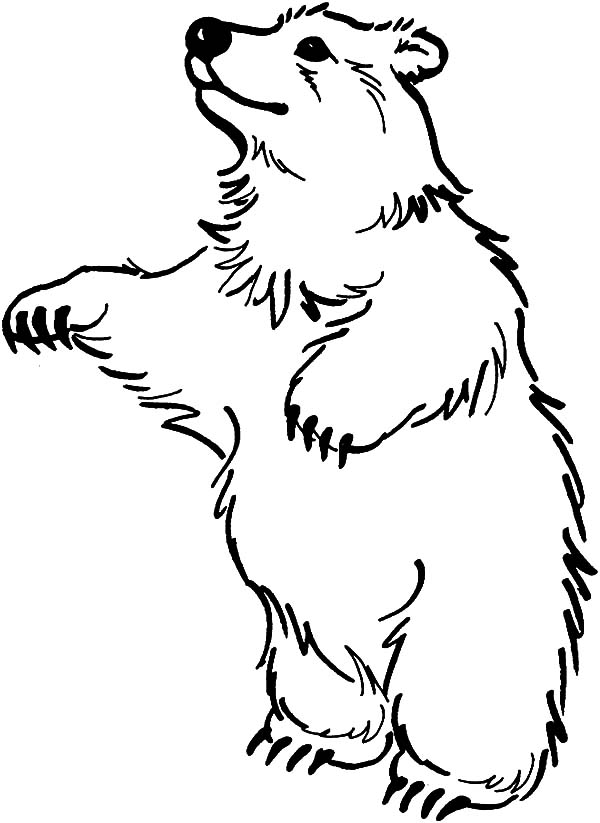 Circus Bear, : Circus Bear Standing on Two Feet Coloring Pages