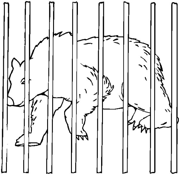 circus cages coloring pages - photo#3
