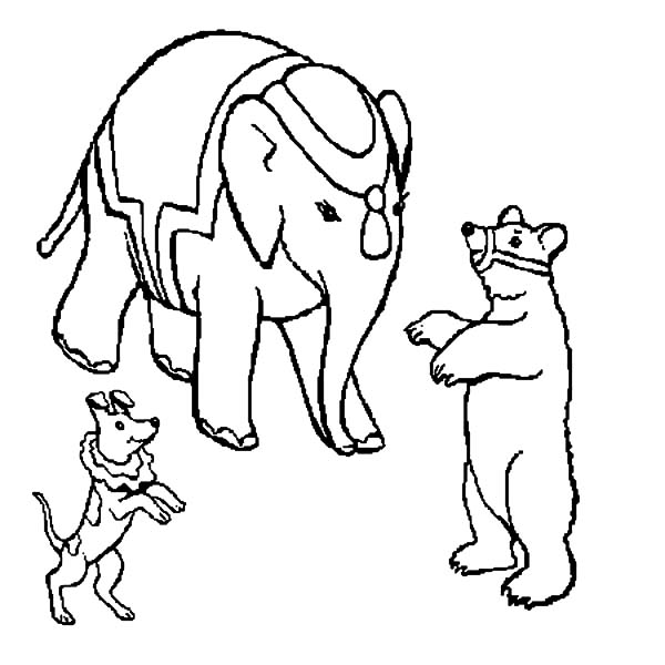 Circus Bear, : Circus Bear with Elephant and Dog Coloring Pages
