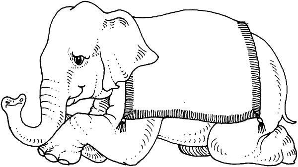 Circus Elephant, : Circus Elephant Kneeling to Audience Coloring Pages