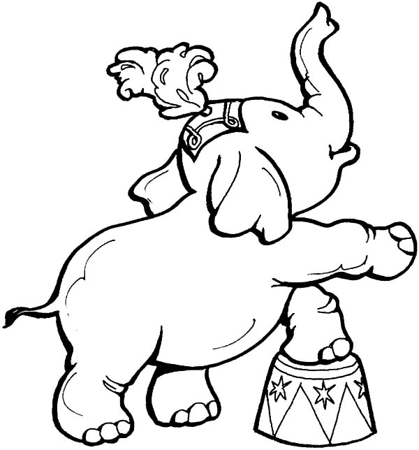Circus Elephant, : Circus Elephant Steping on Tiny Chair Coloring Pages