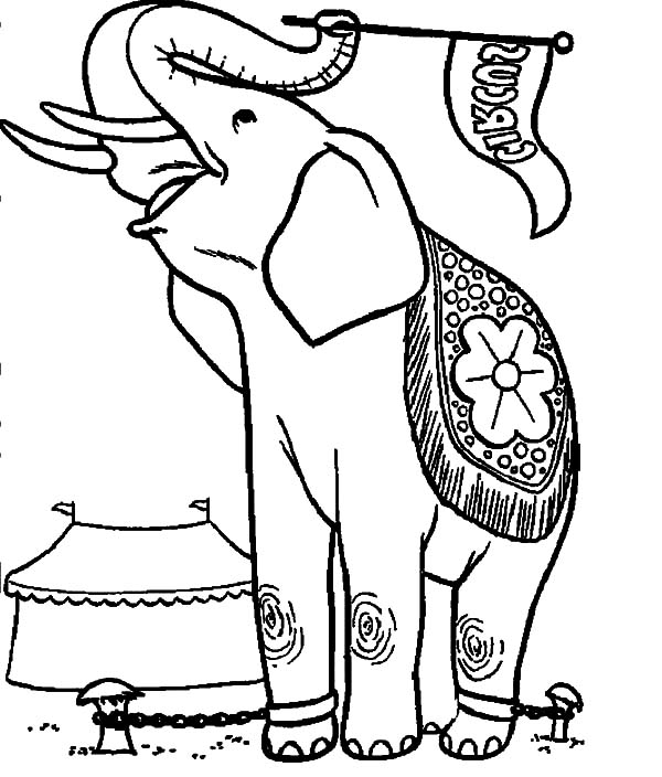 Circus Elephant, : Circus Elephant Waving Circus Flag Coloring Pages