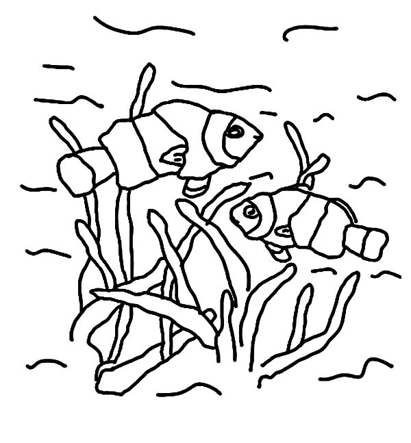 Clown Fish Couple Coloring Pages