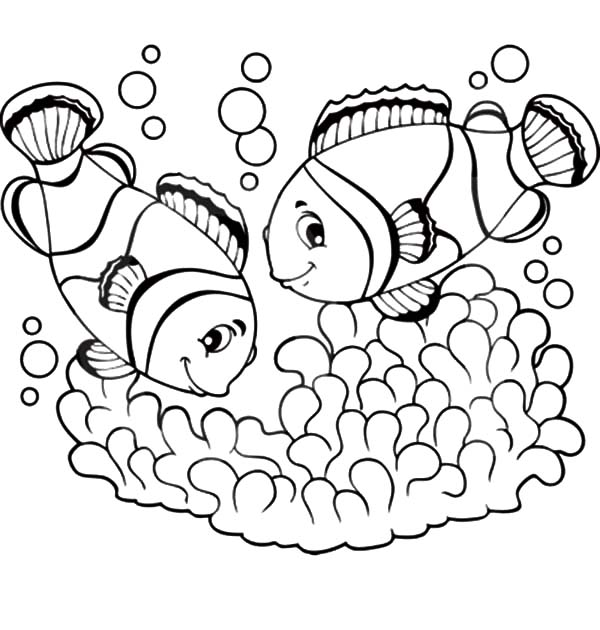 clown coloring pages for preschoolers - clown fish coloring pages