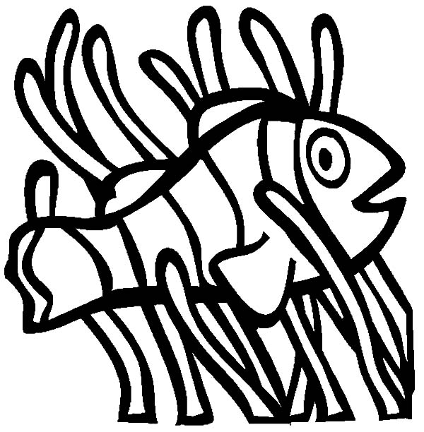 Clown Fish, : Clown Fish Living Among Anemon Coloring Pages
