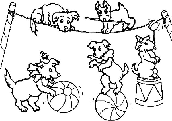 Carnival, : Dog Circus at Carnival Coloring Pages