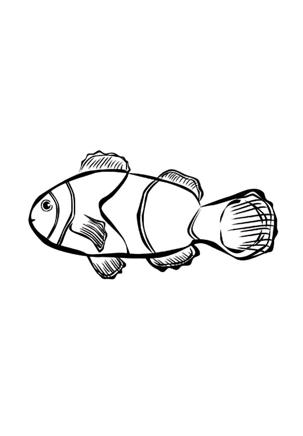 cute little clown fish coloring pages best place to color