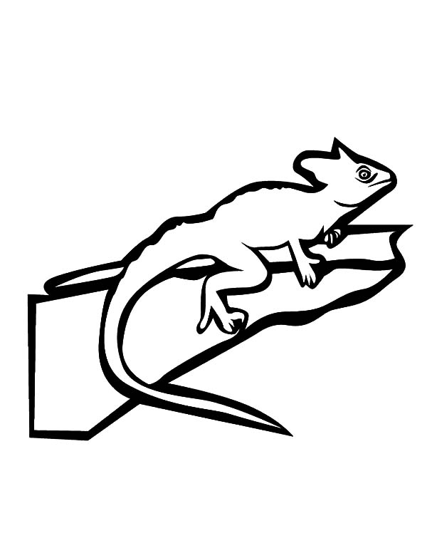 fabulous lizard chameleon coloring pages - Chameleon Coloring Pages Print
