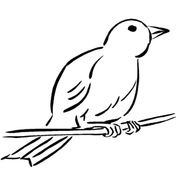 canary bird coloring pages - photo#20