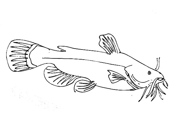 Catfish, : Female Catfish Coloring Pages