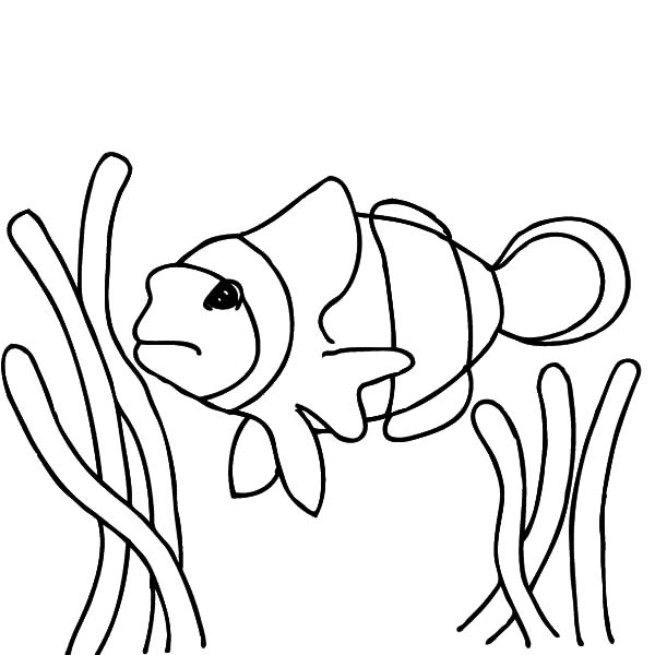 Happy Clown Fish Coloring Pages Best Place To Color Clown Fish Coloring Pages