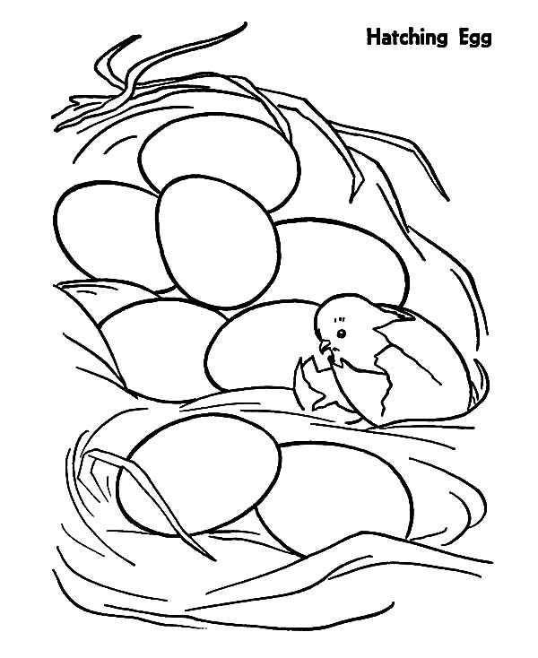 Chick Hatching, : First Chick Hatching Coloring Pages