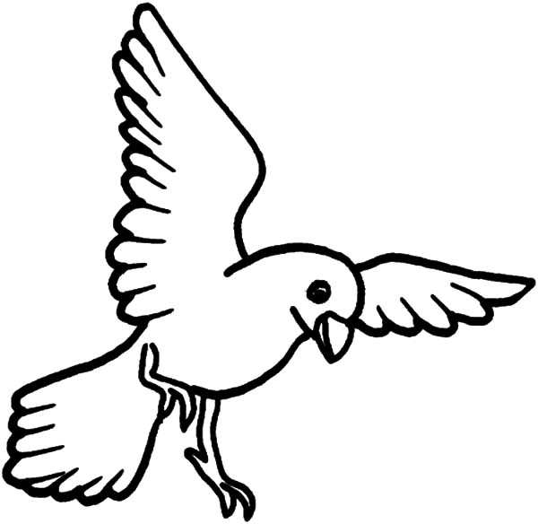 Canary Bird, : Flying Canary Bird Coloring Pages