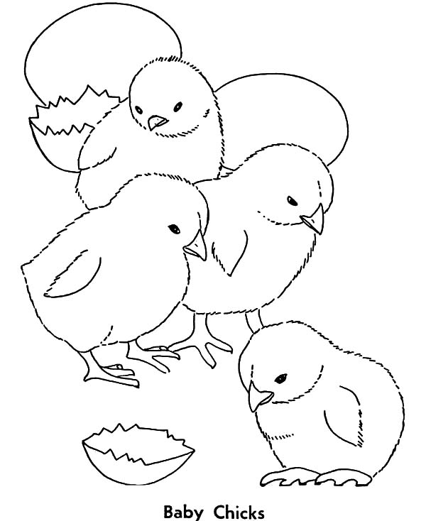 Chick Hatching, : Four Chick Hatching Feeling Tired Coloring Pages