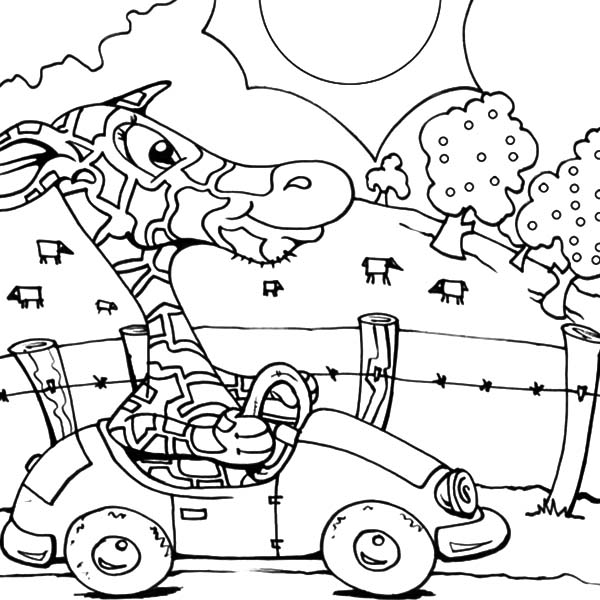 Car Driving, : Giraffe Car Driving Coloring Pages