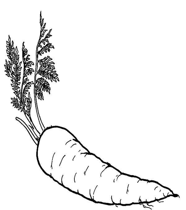Carrot, : Good Vegetables Carrot Coloring Pages