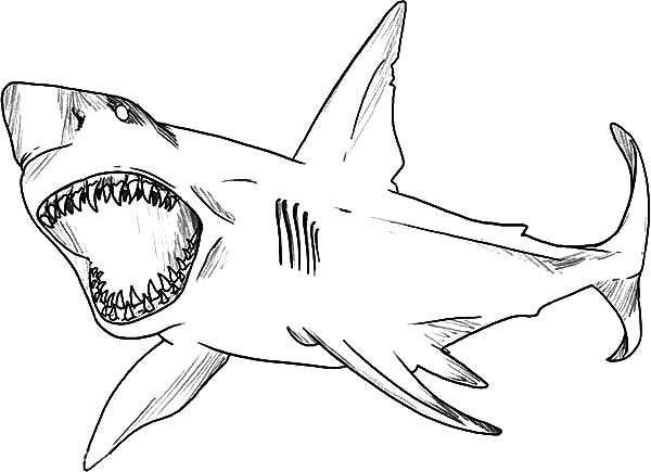 Bull Shark For The Incredible And Attractive Great White Great White Shark Coloring Page