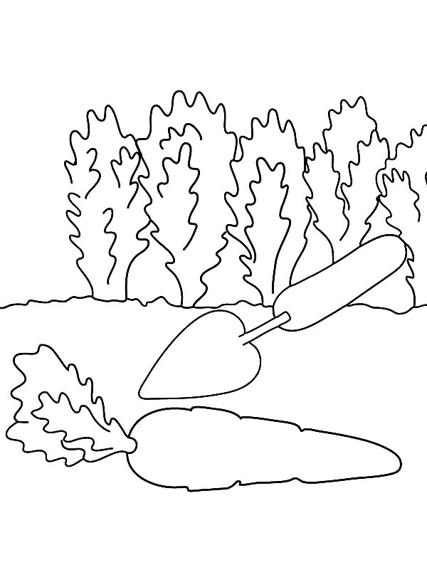 Carrot, : Harvest Carrot with Trowel Coloring Pages