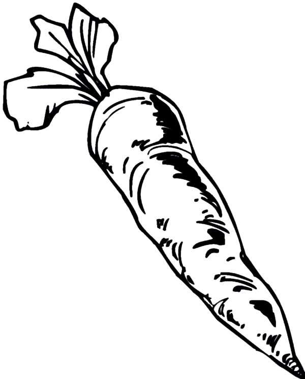 Carrot, : Harvesting Carrot Coloring Pages