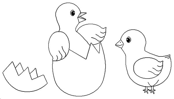 Chick Hatching, : Hatching Chick Meet Her Friend Coloring Pages