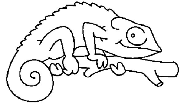 Chameleon, : How to Draw Chameleon Coloring Pages
